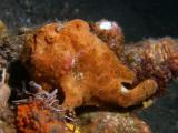 Frogfish10.JPG