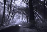 Foggy Coastal Road Near Klamath