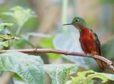 Ecuador--Photo Birding Tour 2010