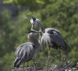 Greeting at nest change