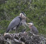 Nest 1 Chicks