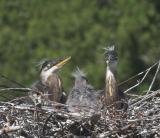 Three Amigos in Nest 2