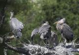 Nest 2 chicks after a feeding
