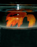 Autumn In A Bowl Of Water