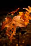 Passing Of Autumn