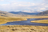 The Lamar Valley, America's Serengeti