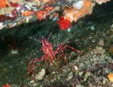 shrimplow.jpg