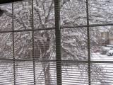 feb_2011_pics_-_snow_and_ice
