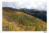 Shades of Fall 11-14-8