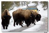 3-4-8 Buffalo Jam
