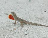 DSC_0029_lizard_red.jpg