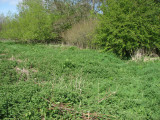 Archie's gravel pit meadow