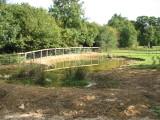 Hazlegrove wildlife pond