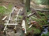 Magic mushroom timber trail 006.jpg