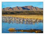 Bosque Del Apache National Wildlife Refuge - 2005