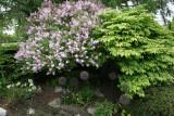 Trädgårdstramp i Sundsvall