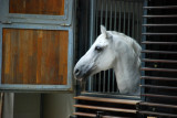 Horse in a stable in the heart of Vienna