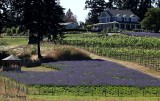 Damali Lavender Farm
