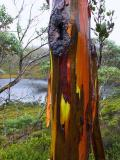 Wet coloured bark