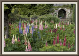 The Lupin Garden