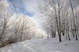 Max Patch Snow 7