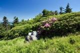 Roan Mountain 4