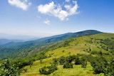 Roan Mountain 11