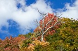 Blue Ridge Parkway Fall Color 3