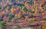 Blue Ridge Parkway Fall Color 9