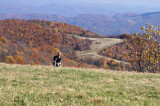 Max Patch Mountain 7