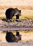 0001-Bear-Bear.jpg