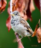 001-Autumn-bird.jpg