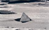 Sigma 50-500mm f4-6.3 - 500 mm - 1-1000 sec at Ÿ - 10.jpg
