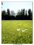 10_06_06 Summer Garden