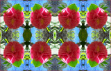 Camellia Headgear
