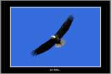 YN6Y0168-copy.jpg