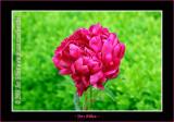 YN6Y8487-copy-b.jpg