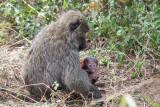 Uganda Animals-1041.jpg