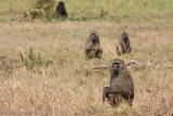 Uganda Animals-1256.jpg
