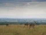Uganda Animals-980.jpg