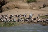 Uganda Birds-107.jpg