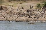 Uganda Birds-109.jpg