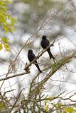 Uganda Birds-65.jpg
