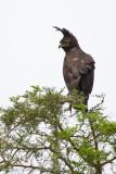 Uganda Birds-84.jpg