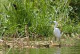 Uganda Birds-99.jpg