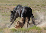 Like a fighting bull.JPG