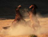 Fight in the dust.JPG