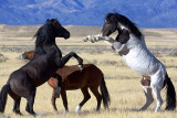 Geronimo and the Black