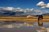 Desert Waterhole and Landscape