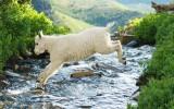 Scenics and wildlife from Utah's Mt. Timpanogos